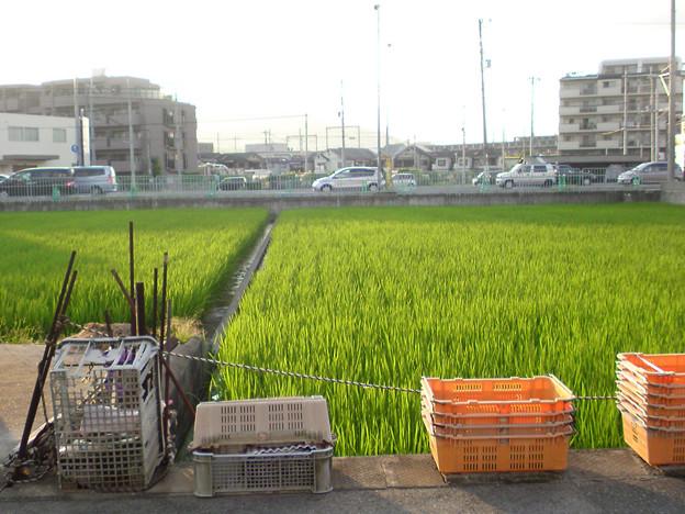 hinokuchi_0577