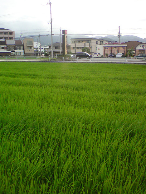 hinokuchi_0594