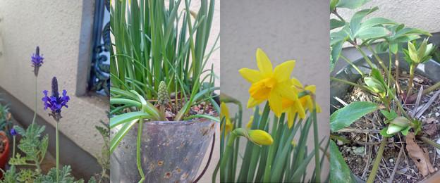 写真: 110319_flowers