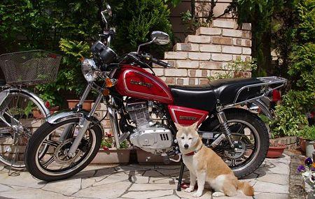 我が家の愛犬とGN125-2F