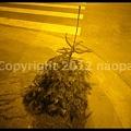 Photos: P2980941