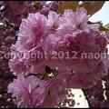 写真: P3060753(1)