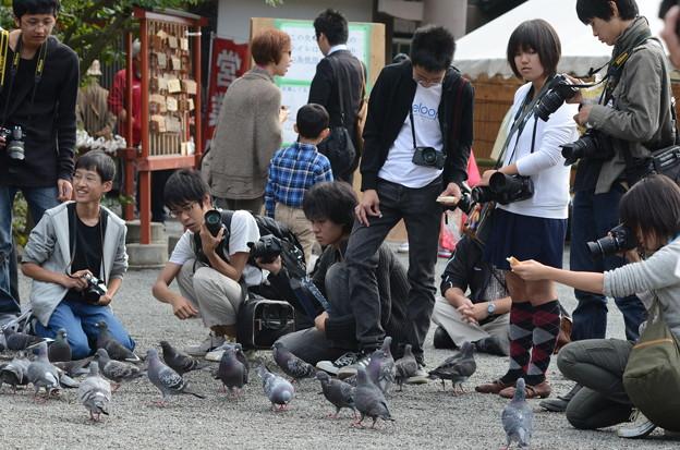 鎌倉 秋日和39