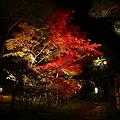 写真: 『煌秋』
