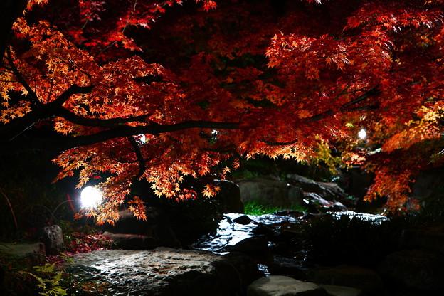写真: 『輝紅。。。』 ~白鳥庭園~