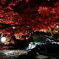 『輝紅。。。』 ~白鳥庭園~
