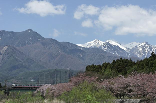 Photos: 列車と桜とアルプスと。(2)
