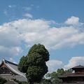 写真: 飛雲閣