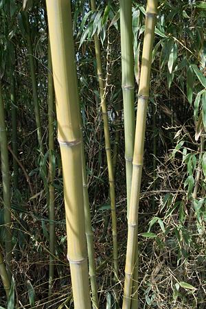 Bamboo02222012dp2-03