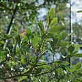 Photos: leaves02222012dp2