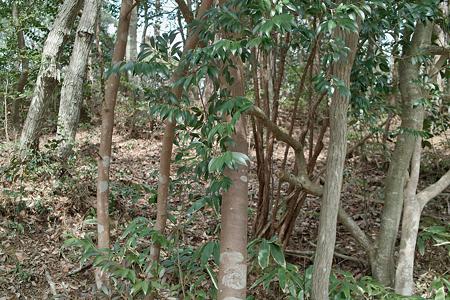 trees03162012dp2-10