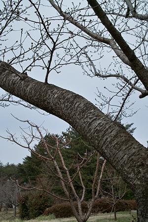 tree03302012dp2-01