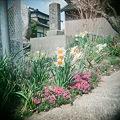 Photos: flower04212011holga