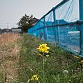 Photos: flowers05022011dp1-04
