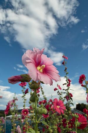 Flower07092011sd15-03