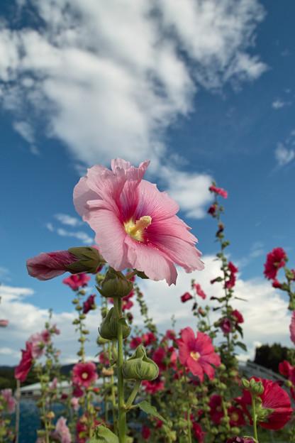 Photos: Flower07092011sd15-03