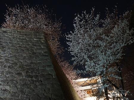 松山城の石垣と夜桜