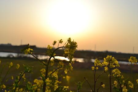 春の訪れ@江戸川河川敷[千葉]