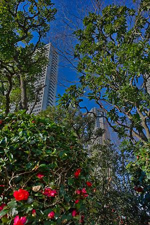 花木と摩天楼SDIM0090