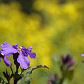 Photos: 春めぐる
