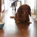 Photos: 犬の大も暑い