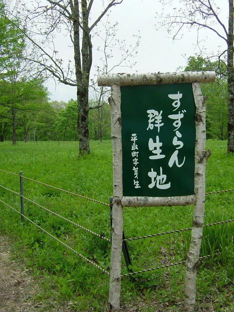 平取すずらん群生地(2011.6).9