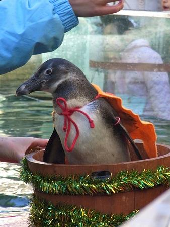20111225 どんぶらこクリスマスver02