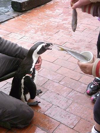 20120331 掛川 ペンギンランチ04