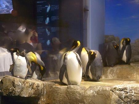 20110815 海響館 亜南極水槽10