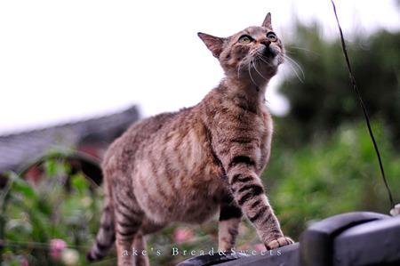 110530お母さん猫