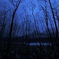 暮れゆく水芭蕉の森