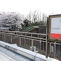 Photos: 2012桜@丸ノ内線・四ツ谷駅ホーム?