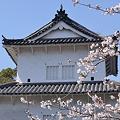 Photos: 2012 桜(2)