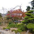 Photos: 西南院庭園