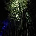 Photos: 京都・嵐山花灯路