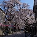 2012桜道(横浜市港南区)その2