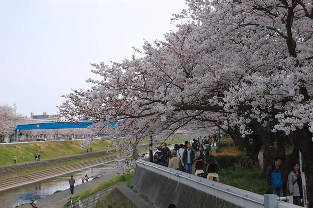 Photos: 20110410_153824