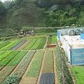 写真: 東莞の農家