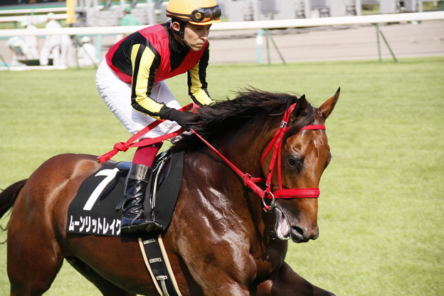 写真: 中山9R ムーンリットレイク 返し馬
