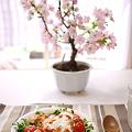 写真: 桜、満開。お花見タコライス