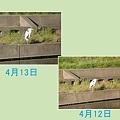 Photos: なんだこいつ(?_?)