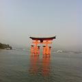 Photos: 厳島神社の大鳥居!!