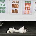 11月4日十分ジュース屋の猫