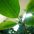 Photos: Leaf+Peace*