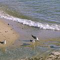 Photos: 浜に遊ぶ