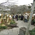 写真: 鶴岡八幡ぼたん園