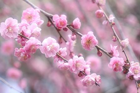 春の調 ♪♪♪