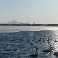 利尻富士の見える沼に…
