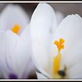 Photos: Whites... 3-22-12