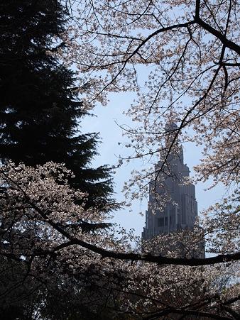 ドコモタワーと桜